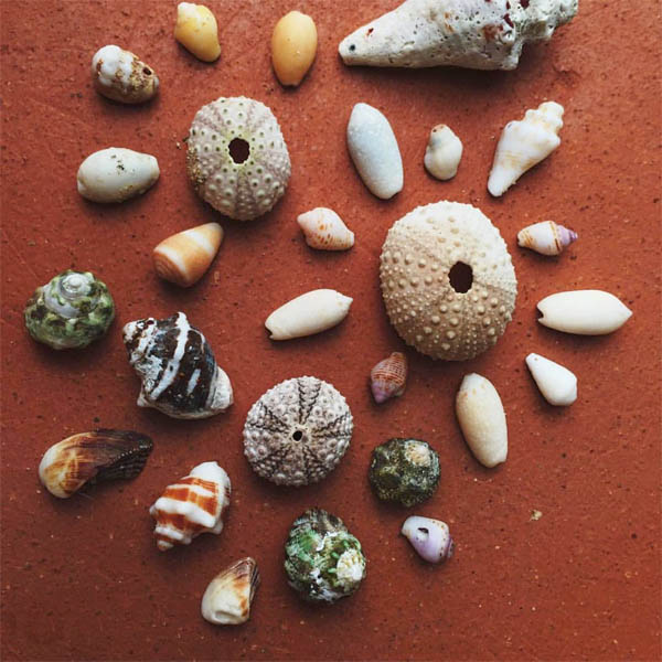 Seashells from the seashore